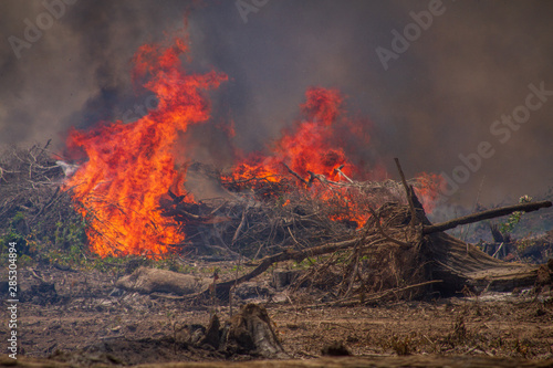 Valokuva  Forest on fire on the banks of the Xingu River, Amazon - Brazil