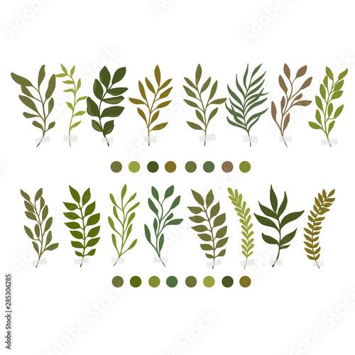 Fototapety, obrazy: Vector botanic illustrations. Botanical clipart. Set of Green branches.