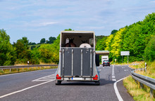 Car With Horse Trailer On Road