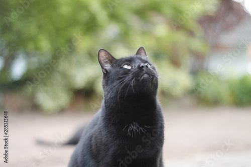 Photo Stands Panther Curious black cat in garden