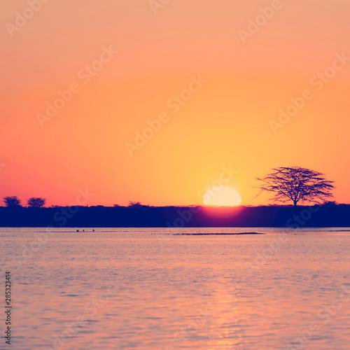 Poster Corail Botswana Sunset