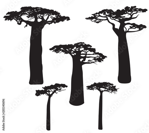 Obraz na plátne Set of black baobab tree silhouettes