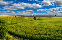 Corn Field Lines And Beautiful Landscapes
