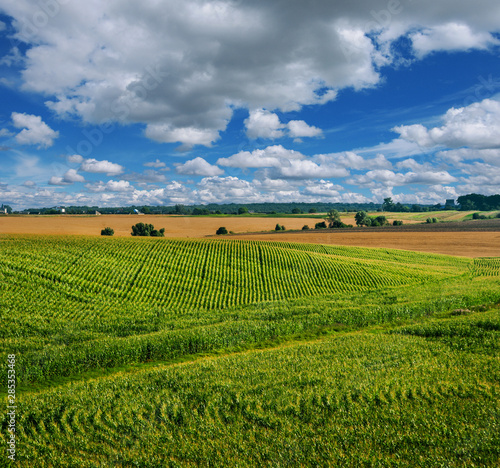 Fényképezés Corn field beautiful landscapes lines