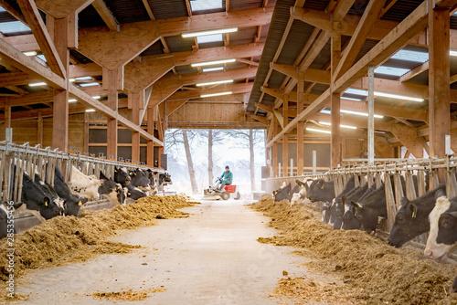 Foto Neuer heller großer Milchviehstall mit fressenden Kühen