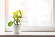 Green Plant On The Windowsill ...