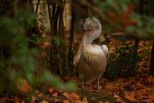 Beautiful Cute Pelican Stands ...