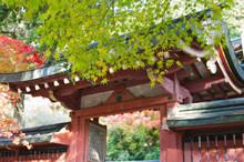 Scenery Around Jingoji Temple ...