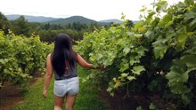 Girl Walking Among The Grapevines At A Local Vineyard In North Georgia Mountains, On Nice Summer Day.
