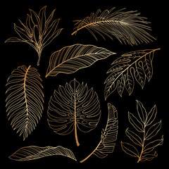 Fototapeta Liście Set of tropical plants leaves. Botanical gold outline. Coconut palm, monstera, banana tree.