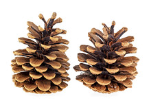 Two Beautiful Pine Cones Isolated On A White Background