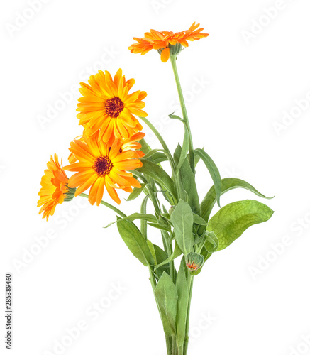 Photo  Bouquet of medical flower on a white background - Calendula officinalis