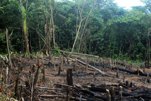 Deforestation Of The Amazon Ra...
