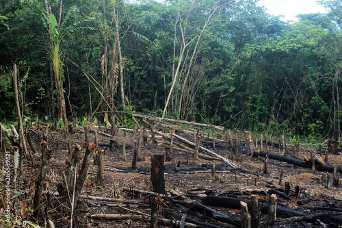 Photo Deforestation of the Amazon rainforest, through slash-and-burn