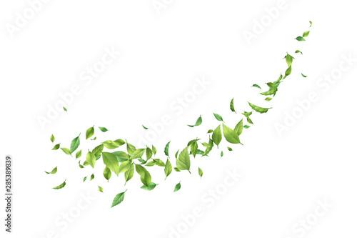 Obraz Greens Leaf Whirling in the Wind - fototapety do salonu