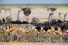 Etosha National Park Salt Pan - Rare Unique Enviroment With Salt Sand Plains, Namibia, West Africa.
