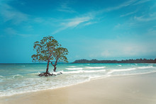 Stunning View Of Long Island Beach, Beautiful Tree In The Sea Water, Andaman Nicobar Islands. Holidays On An Exotic Island In The Indian Ocean. Tourism, Tourist, Travel, Touring, Cruise