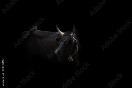 Meet the Bull
