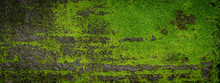 Moss Green Texture. Moss Backg...