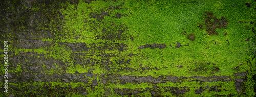 Valokuvatapetti Moss green texture