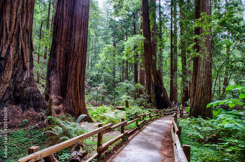 Photo sur Toile Marron chocolat Muir Woods