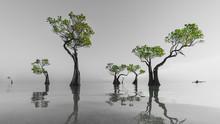 Mangrove Trees Walakiri Beach ...