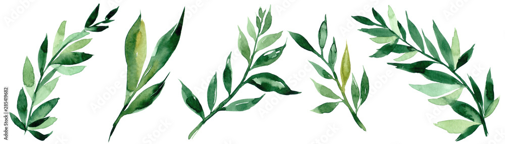 Fototapeta Hand drawn watercolor illustration of abstract green branch. Elements for design of invitations, movie posters, fabrics and other objects