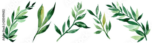 Obraz Hand drawn watercolor illustration of abstract green branch. Elements for design of invitations, movie posters, fabrics and other objects - fototapety do salonu