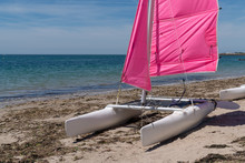 Sailboats Pink From Rent At No...