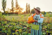 Senior Woman Farmer Picking Au...