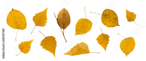 Set of Dry Leaves Isolated on White Background - 285457461