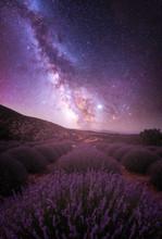 Lavender Fields Under The Summer Milky Way With Jupiter In Veiw.