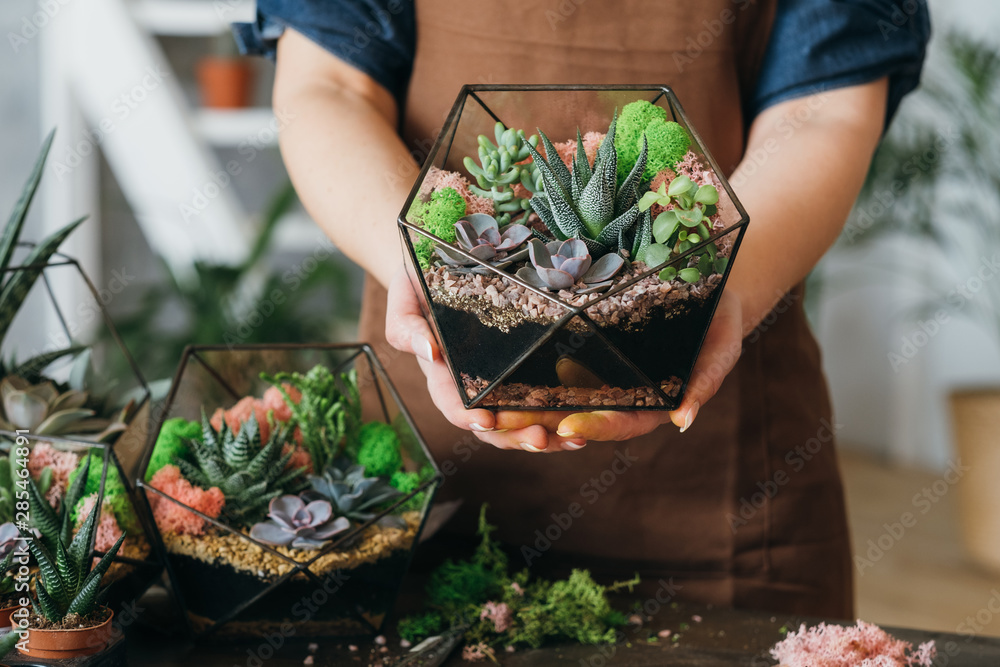 Fototapety, obrazy: DIY florarium. Creative gift delivery service. Cropped shot of woman holding glass geometric vase with growing succulents.