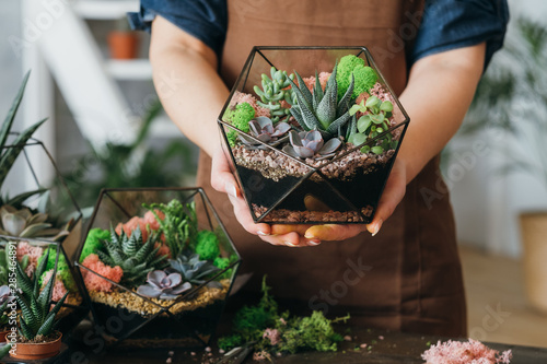 Fototapeta DIY florarium. Creative gift delivery service. Cropped shot of woman holding glass geometric vase with growing succulents. obraz