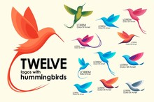 Modern Set . Colorful Birds, Colibri, Hummingbird In Flight, Trendy Minimalistic Template Design For Logos, Emblems, Symbols