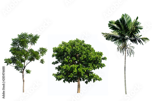 Fotografija  Tree