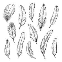 Birds Feathers Hand Drawn Illustrations Isolated Set