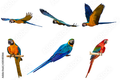 Foto op Canvas Papegaai macaw with white background.