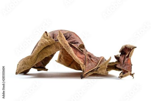 Fototapeta Wilted Dry Leaf Isolated