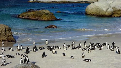 Penguins in Boulders Beach. South Africa Billede på lærred