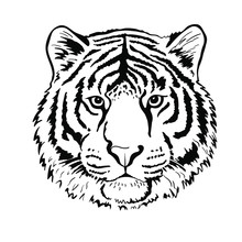 Tiger Portrait Head Isolated On White Background. Template. Close-up. Clip Art. Hand Painting. Ink