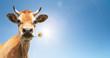 canvas print picture - Kuh mit Blume im Maul