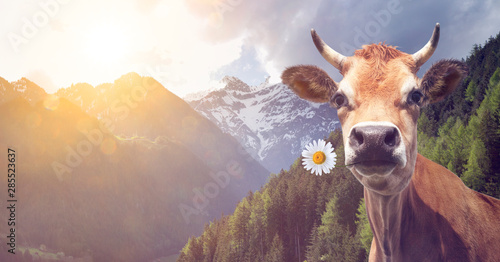 Wall Murals Cow Kuh mit Blume im Maul