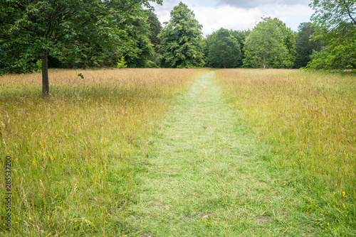 Green outdoor park path entering a wild meadow with long wild grass and trees in Fotobehang