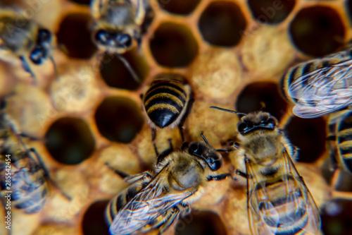 Macro photograph of bees Canvas Print