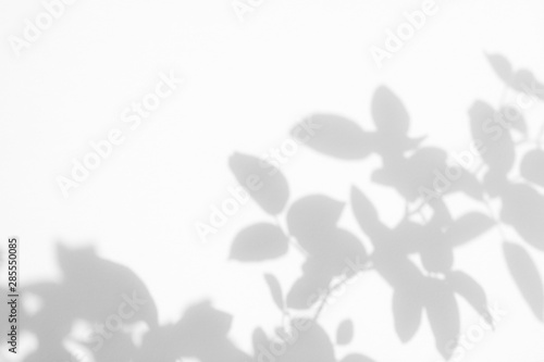 Poster Fleuriste Overlay effect for photos and mockups. Gray shadow of the wild roses leaves on a white wall. Abstract neutral nature concept blurred background. Space for text.
