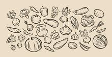 Many Hand-drawn Vegetables. Food Sketch Vector Illustration