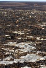 Exposed Limestone Rocks In Kansas Prairie After Burning Grass