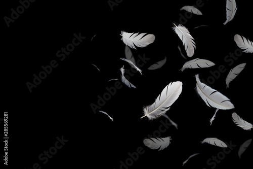 abstract, white feathers floating in the dark, black background Canvas Print