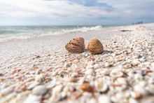 Seashells Shelling Activity On...